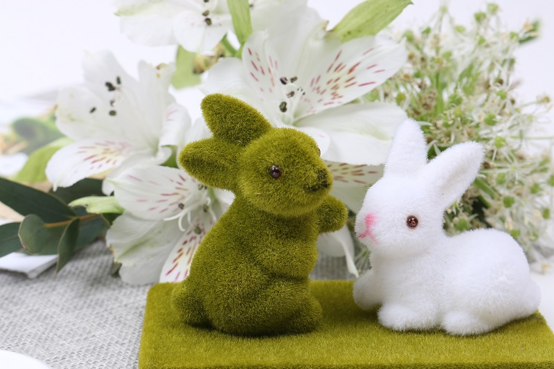 Concours photo lapin